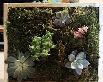 Frame / plant table