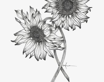 Sunflower Fine Art Print Drawing Sketch Pen and Ink