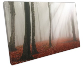 Dreamy white sun beams Red carpet of leaves Forest sunlight Canvas X1237