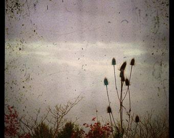 "Dreamy Forest Photo ""In the Gloaming"" Fine Art Woodland Fairy Tale Photograph Print - Purple Mauve Dusk Light - Surreal Floral Art Print"