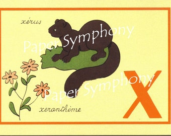 French Flash Card - X for xerus and xerantheme to Frame or for Paper Arts PSS 0531