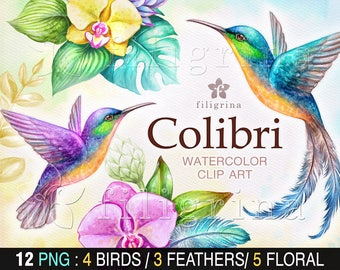 COLIBRI watercolor Clip Art. Humming bird, tropical orchid flowers, green leaves, botanical illustration, nature, feather. Read about use