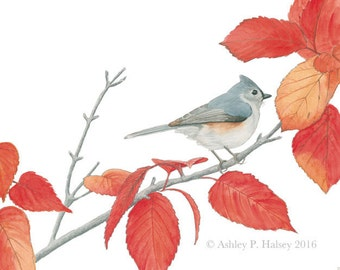 Tufted Titmouse Watercolor Print