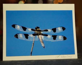 Spotted Dragonfly Photo Greeting Card