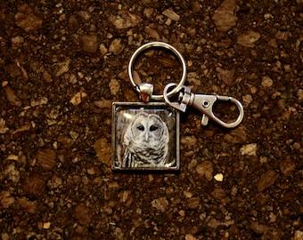 """Barred Owl """"Brewster"""" Key Fob"""