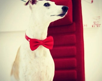 Red dog bow tie collar, handmade pet accessories, dog lovers, Red bow tie