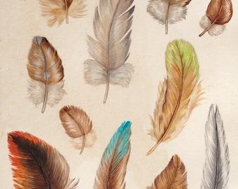 Australian Bird Feathers A5 Print, Bird Artwork, Feathers Painting, Art Print, Wall Art, Wall Decor, Australian Bird Feathers, Bird Print