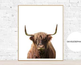 Highland Cow Print, Highland Bull Print, Printable Decor, Farm Wall Art, Cattle Photography, Digital Download, Highland Cow Printable