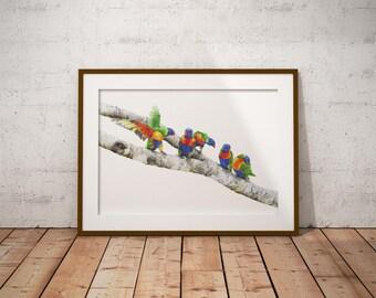 A3 Rainbow Lorikeets Print - Australian Bird Print - Australian Wildlife Print - Australian Native - Bird Print