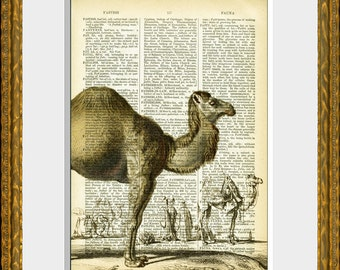 CAMEL recycled book page art print - an upcycled antique dictionary page with a retooled antique desert  illustration - home decor