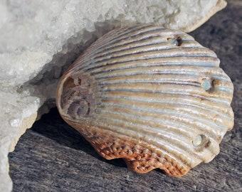 Cabochon de coquillage à la main - mère de finition perle