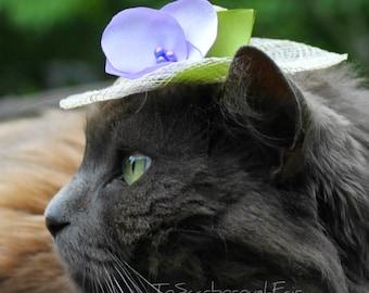 Bonnet - chapeau de chat printemps printemps Bonnet - Bonnet chat - chat