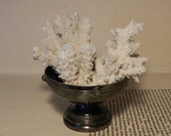 Real coral Cup