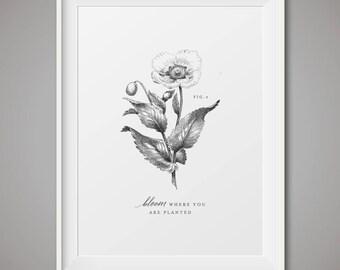 Botanical art prints - Fig 3