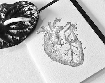 Valentine's Day, Mother's day, Letterpress card, BLACK anatomical heart, vintage image, medical illustration, gothic art, steampunk