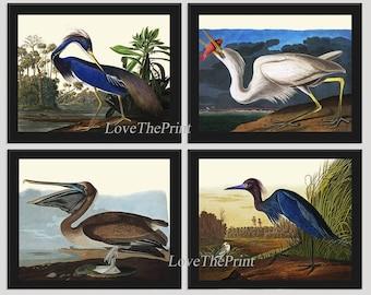 Bird Print Set of 4 Beautiful Antique Audubon Louisiana Heron Great White Heron Pelican Blue Crane Illustration Drawing Home Room Wall Decor