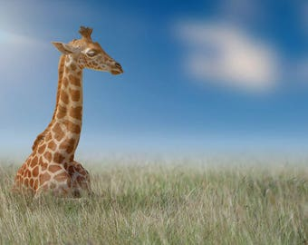 Young Giraffe in grass, Premade Backdrop, Composite, Giraffe Backdrop, digital download, Photoshop Background, Animal Backdrop, story book