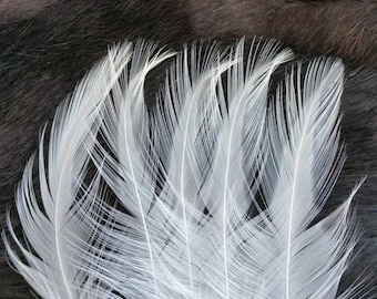 Natural Ivory White Rooster Hackle Feathers - Lot of 50