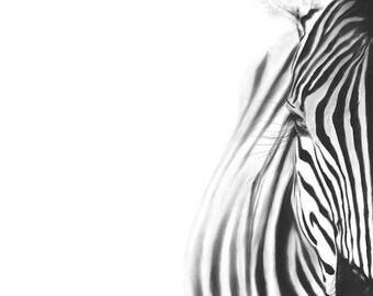 ZEBRA ART PRINT - realistic zebra, animal art print, zebra lover gift, zebra decor, zebra wall art, black and white zebra painting