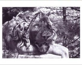The Lounging Lion - Set of Four Note Cards