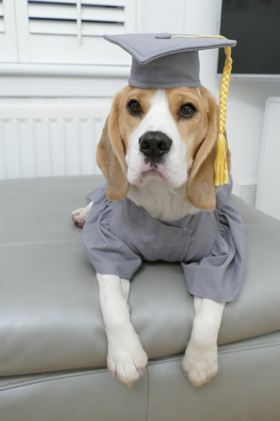 Colorful Cap And Gown For Dogs Collection - Best Evening Gown ...