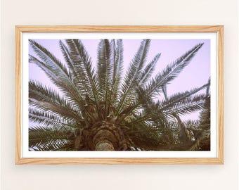 Joshua Tree Photo