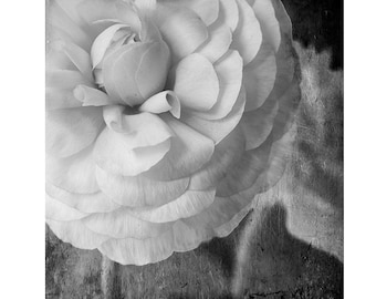 Black and White Photograph, Flower Photography, Floral Wall Decor, Ranunculus Print, Floral Art Print