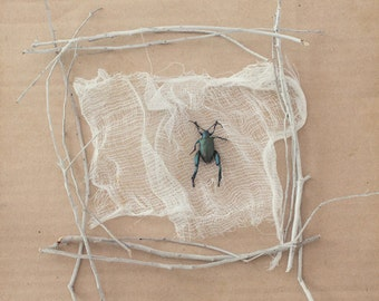 A Delicate Specimen - FREE SHIPPING Surreal Still Life Photography Print beetle twigs white green blue cardboard brown creepy wall art