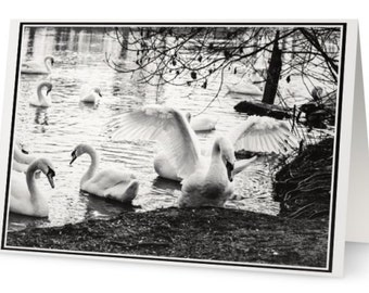Any Occasion Card B&W Swan By The River, Greeting Card Black And White Card, Wildlife Black And White Any Occasion Card, Folded Card