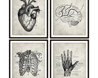 Vintage Heart Anatomy Art Print, Rib Cage, Brain, Hand Skeletal, Human Anatomy Set of Four 5x7 8X10 11x14 Medical Science Doctor Medical Art