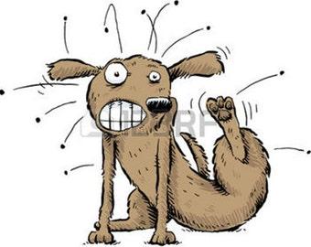 Dog Fleas, Flea Control, Dog Flea Treatment,  get rid of fleas, best flea treatment, natural flea control,best flea treatment for dogs
