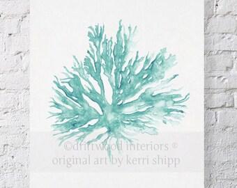 Sea Coral in Woodlawn II Print