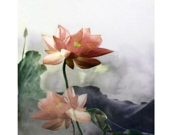 Peach lotus, digital print, flower print, photomontage, modern art, fine art print, home decor, abstract, still life, wall art