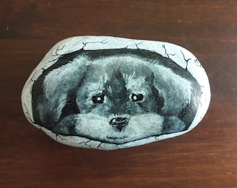 puppy in the shell