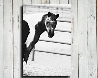 """Paint Pony - 16x24"""" canvas - Black and White horse photography - Horse art - Horse decor - Horse photography - Animal photography"""