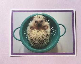 Set of 8 Hedgehog in Strainer folded note card set with envelopes. Inside is blank.