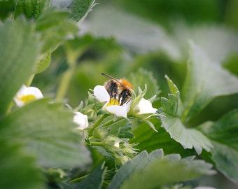 Finlay's Honey Bee