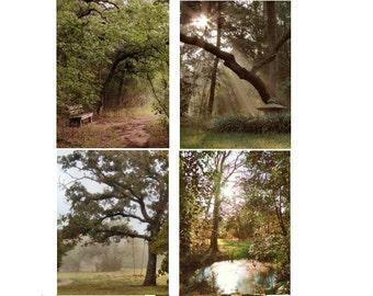 Surreal Woods Photo Set, Dreamy Woods, Nature photos, Dreamy Destination Photo Set,  Texas Landscape Trees Photos, Mossy Color Bending Trees