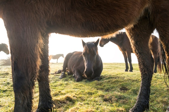 THE HERD. Horses Print, Equine Print, Animal Picture, Wildlife Print, Photographic Print, Limited Edition Print