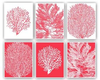 Sea fan prints, 8x10 prints, set of 6, pink red background, modern vintage inspired  by coral, kelp, gorgonian