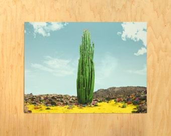 Big Ole Cacti