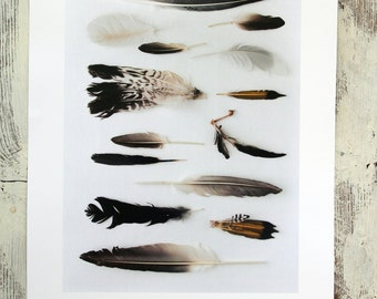 "Naturalist poster  SEASHORE FEATHERS - 13"" x 19"""