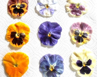 Giant, CRYSTALLIZED, EDIBLE, PANSIES, Purples, Blues, Yellows, Burgundy, Mixed Colors, Large, Cake Decorations,Foodie Gift,  8 large