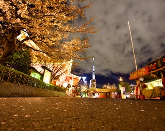 Sensō-ji Temple at night with cherry blossoms in Tokyo, Japan