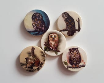 Set of 5 owls and OWL wooden buttons