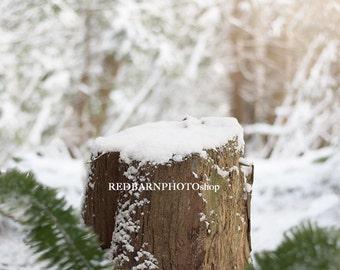 Snowy Forest Scene Digital Background
