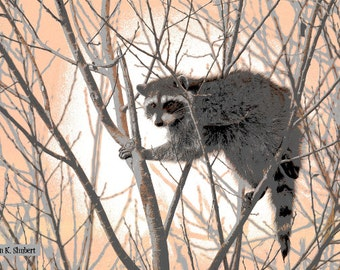 Raccoon Art, Climbing Trees, Southwestern Wildlife, Pink Gray White, Wild Animal, Office or Home Decor, Wall Hanging, Giclee Print, 8 x 10