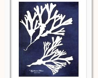 Vintage Botanical Cyanotype Print - Seaweed Impressions - Sea - Ocean - Coral - Beach - Natural History - Sea life - Tide - Nautical