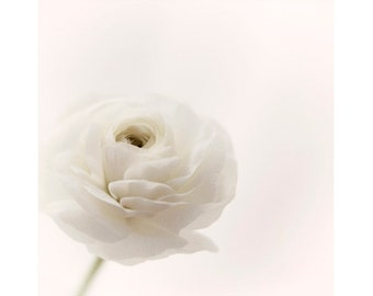 Ranunculus Flower Photography, White Floral Wall Art, Country Chic Decor, Minimalist Art