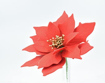 Red and Gold Poinsettia